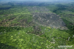 Illegal Palm Oil, Tesoo Nilo National Park