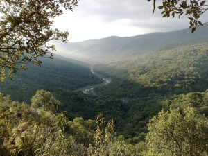 Los Alcornocales Natural Park - the last European Jungle
